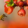 Εργάτρια Μέλισσα